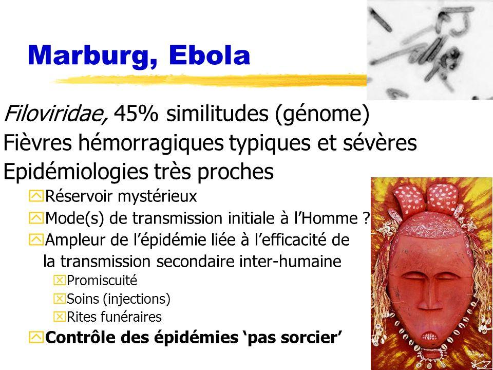 Marburg, Ebola Filoviridae, 45% similitudes (génome)