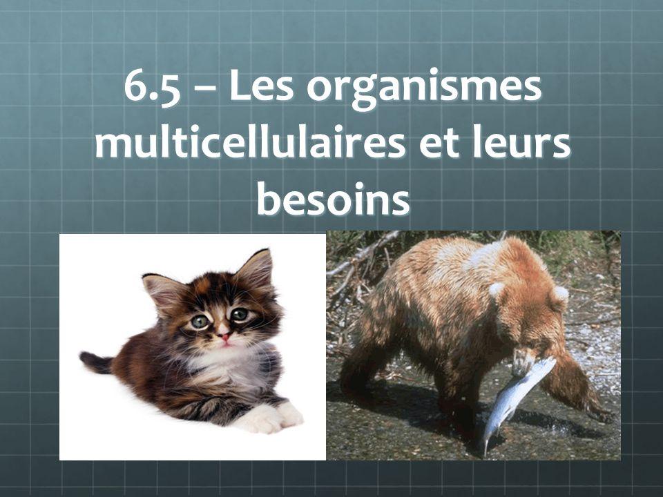 6.5 – Les organismes multicellulaires et leurs besoins