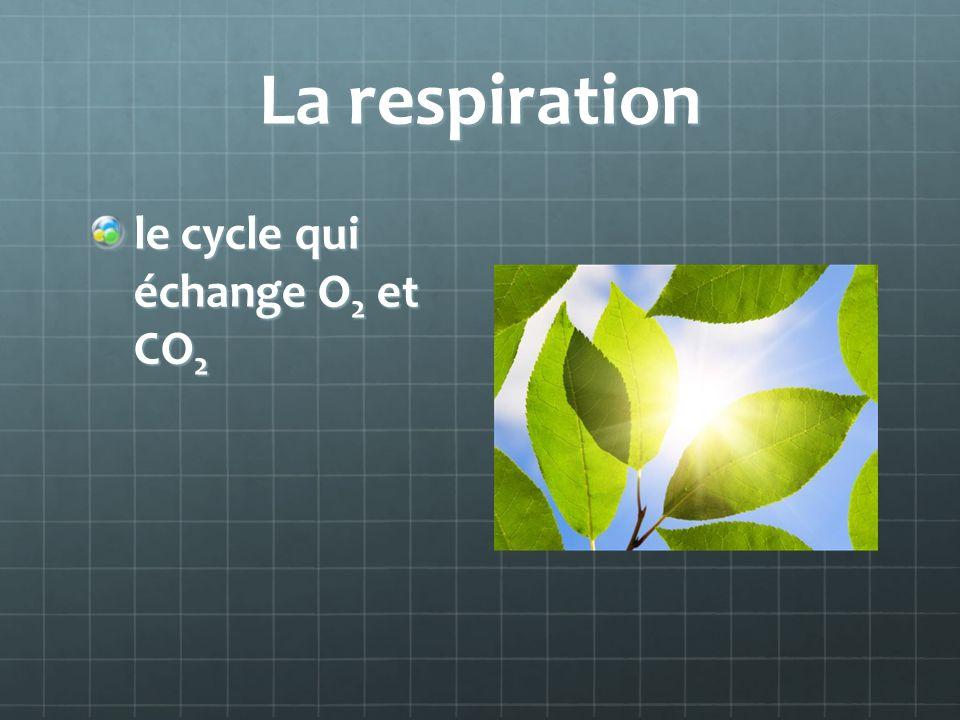 La respiration le cycle qui échange O2 et CO2