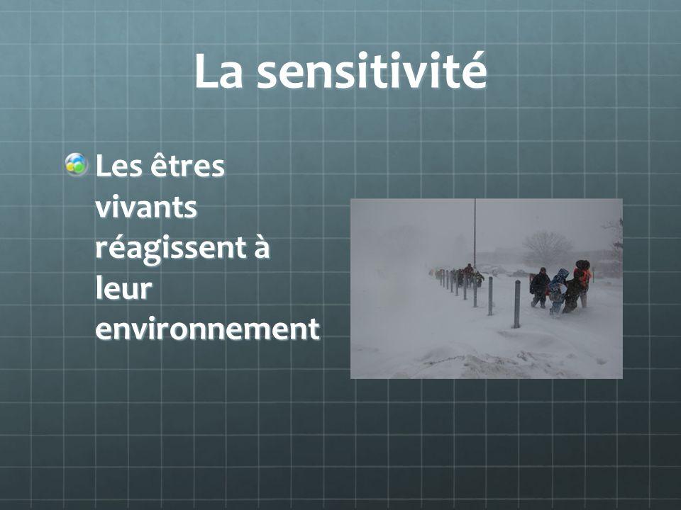 La sensitivité Les êtres vivants réagissent à leur environnement