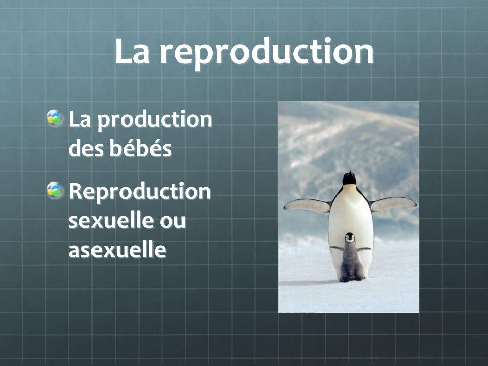 La reproduction La production des bébés