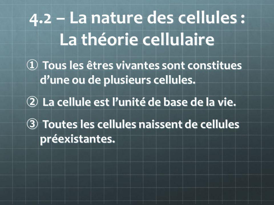 4.2 – La nature des cellules : La théorie cellulaire