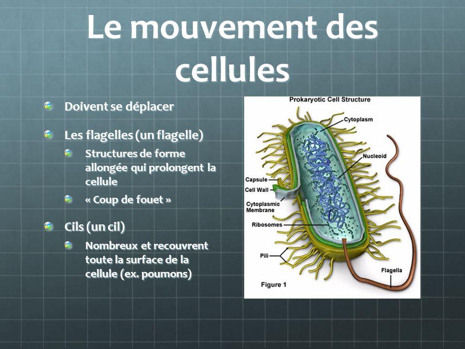 Le mouvement des cellules