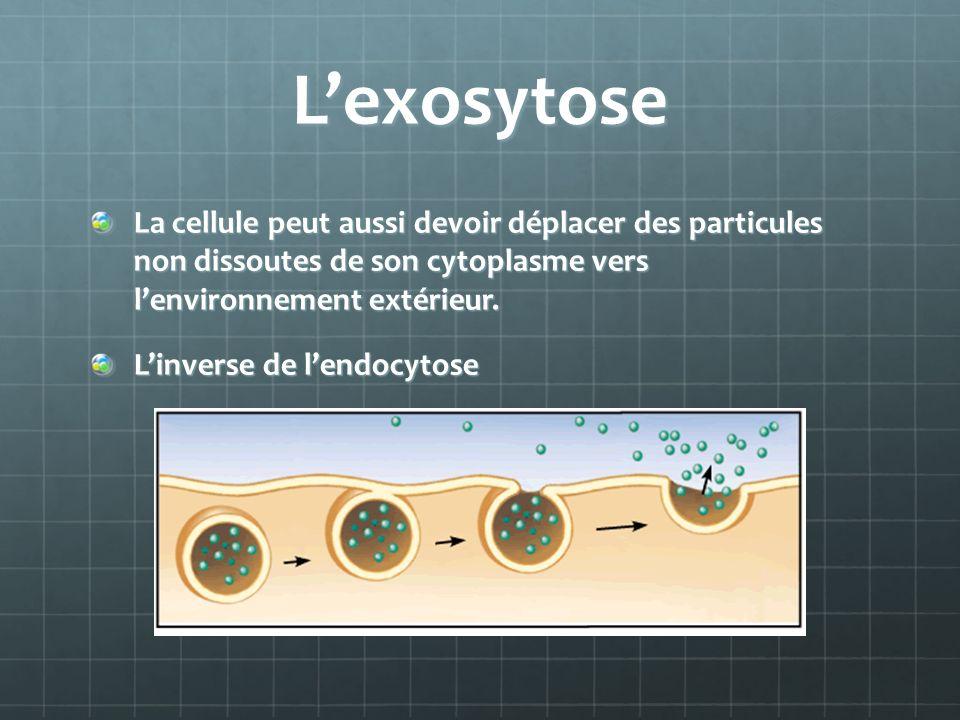 L'exosytose La cellule peut aussi devoir déplacer des particules non dissoutes de son cytoplasme vers l'environnement extérieur.