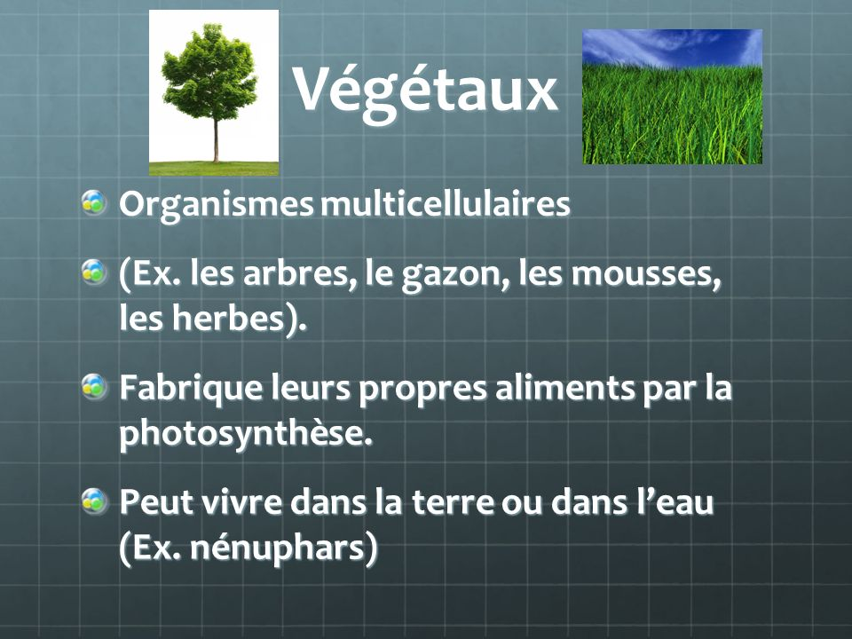 Végétaux Organismes multicellulaires