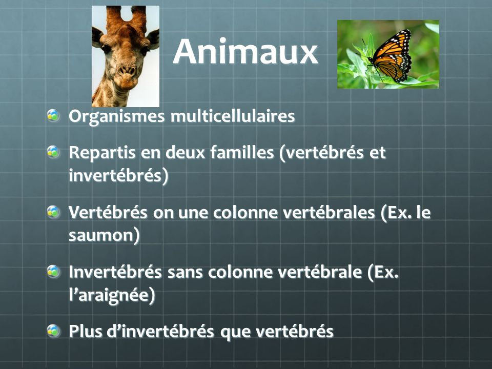 Animaux Organismes multicellulaires