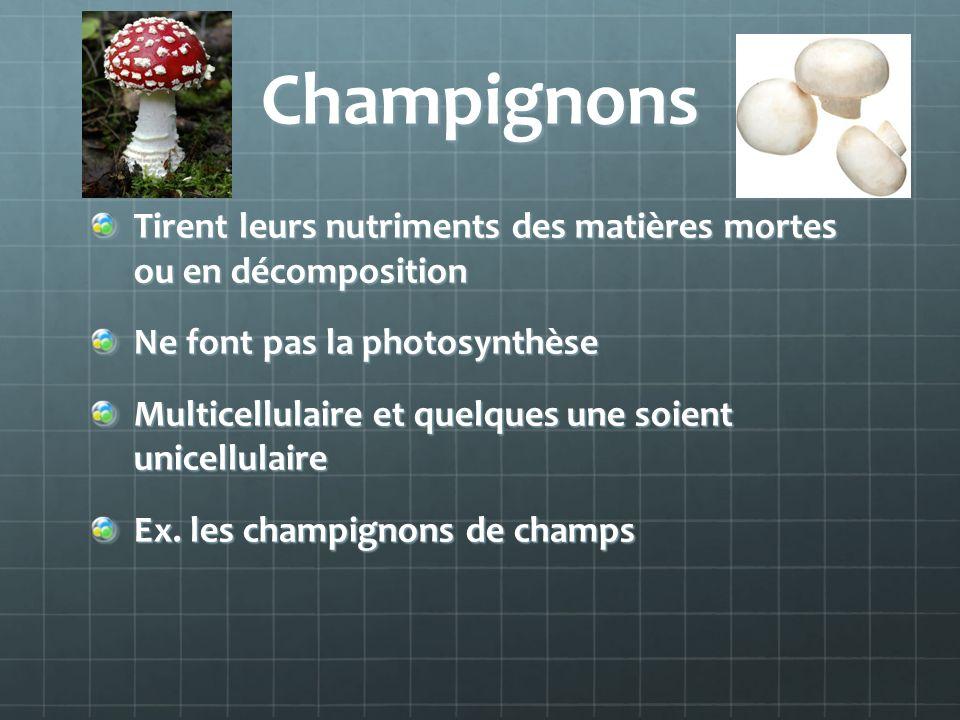 Champignons Tirent leurs nutriments des matières mortes ou en décomposition. Ne font pas la photosynthèse.