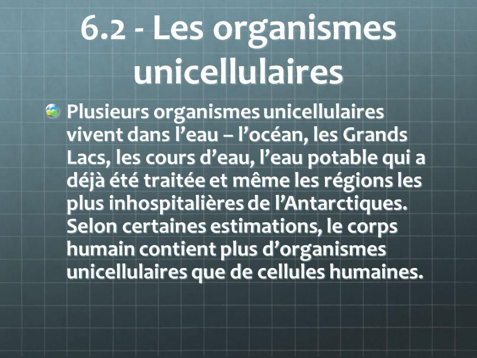 6.2 - Les organismes unicellulaires