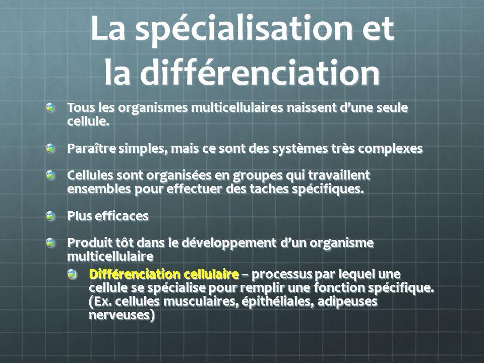 La spécialisation et la différenciation