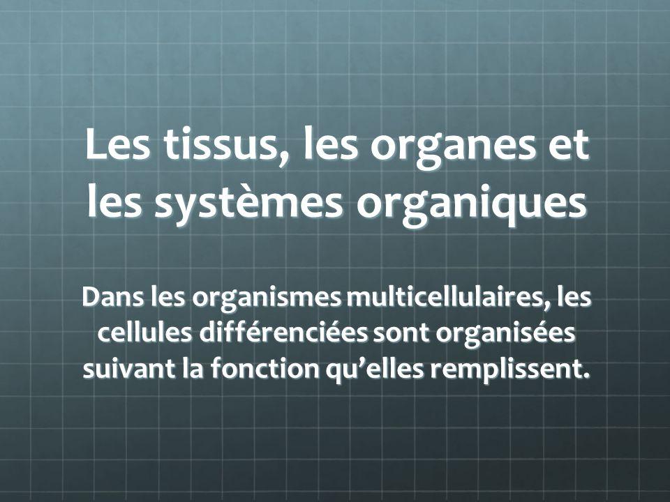 Les tissus, les organes et les systèmes organiques