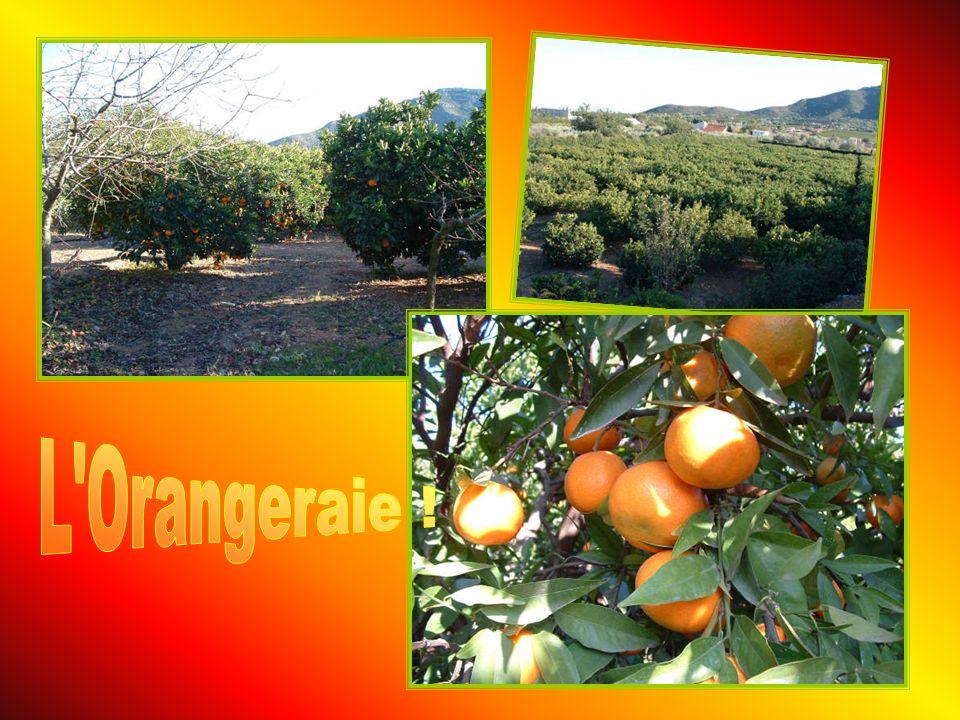 L Orangeraie !