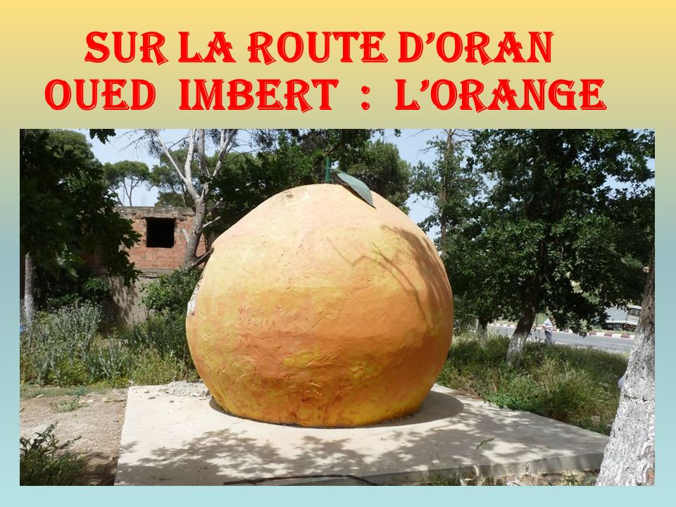 Sur la route d'oran Oued imbert : l'orange