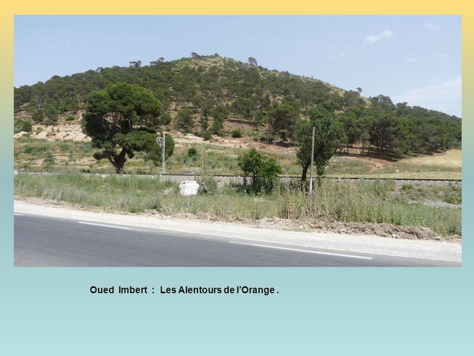 Oued Imbert : Les Alentours de l'Orange .