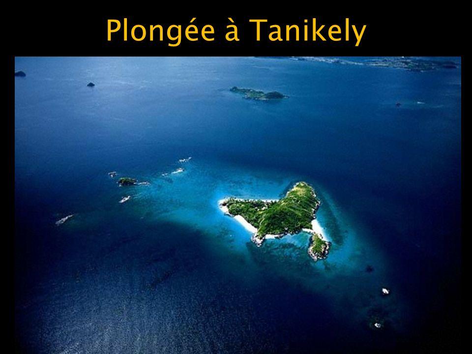 Plongée à Tanikely