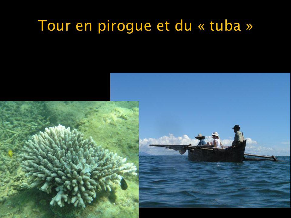 Tour en pirogue et du « tuba »