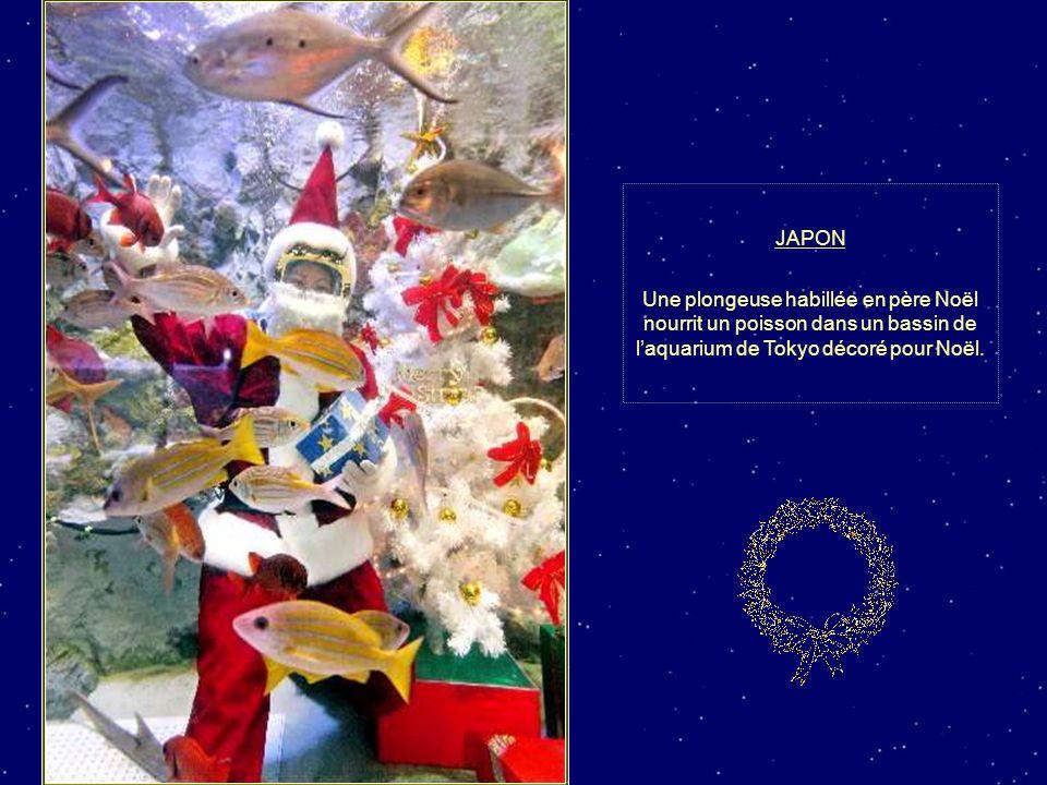JAPON Une plongeuse habillée en père Noël nourrit un poisson dans un bassin de l'aquarium de Tokyo décoré pour Noël.