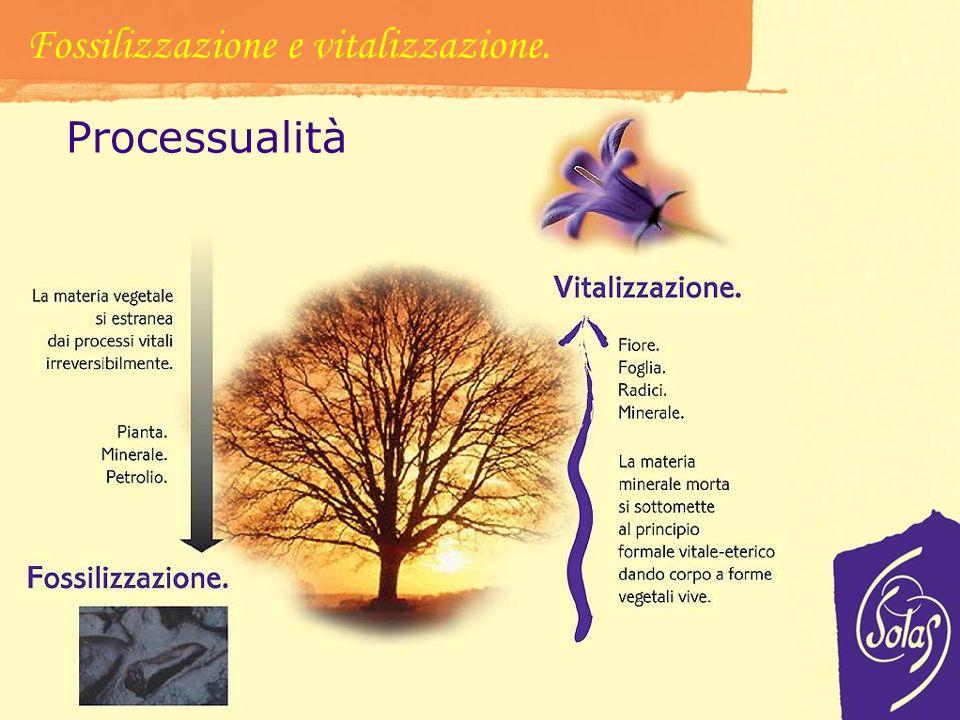 Fossilizzazione e vitalizzazione.