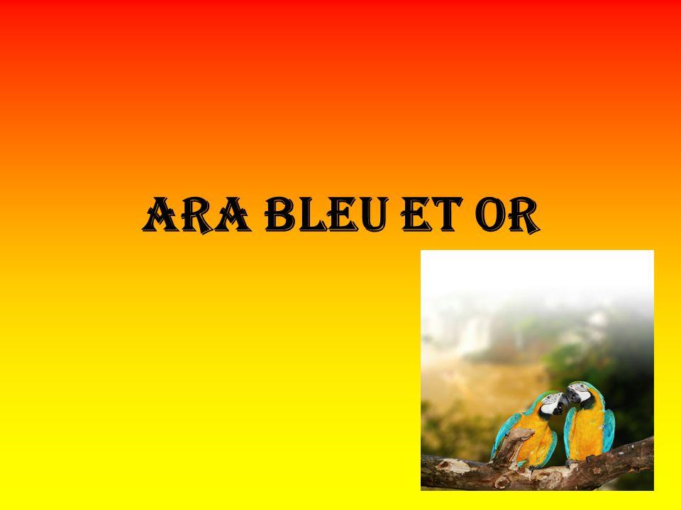 Ara bleu et or