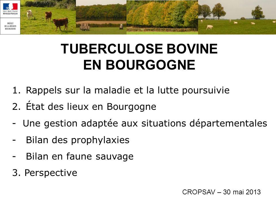 TUBERCULOSE BOVINE EN BOURGOGNE