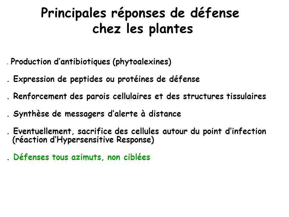 Principales réponses de défense chez les plantes