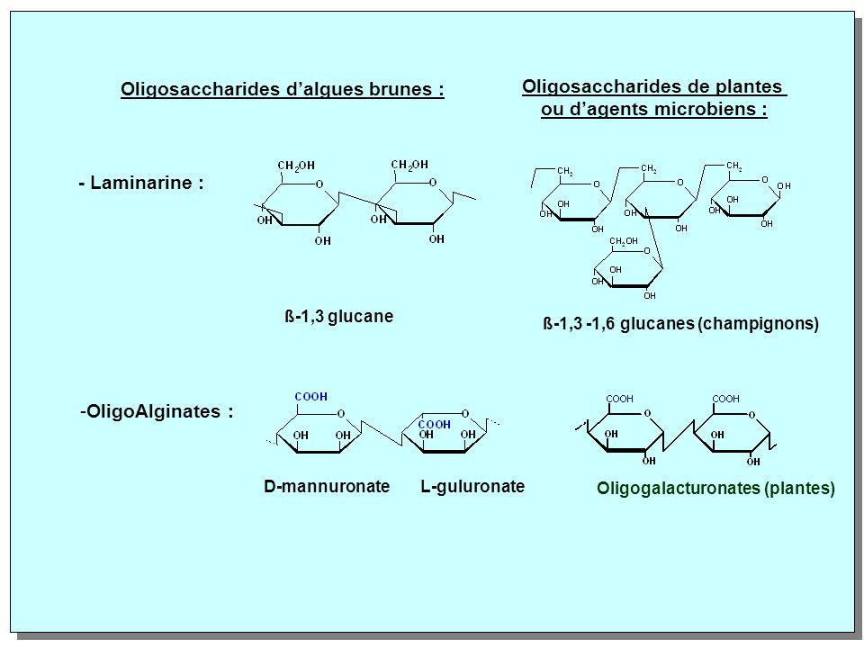 Oligosaccharides d'algues brunes : Oligosaccharides de plantes