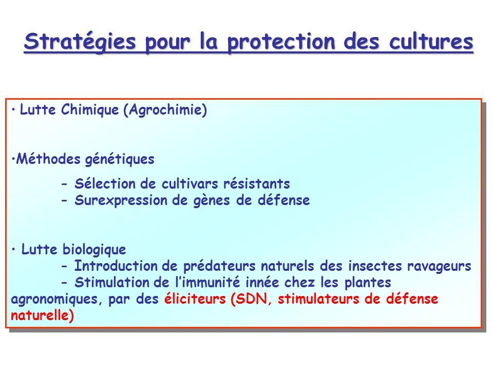 Stratégies pour la protection des cultures