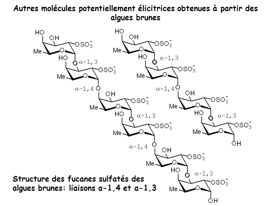 Autres molécules potentiellement élicitrices obtenues à partir des algues brunes