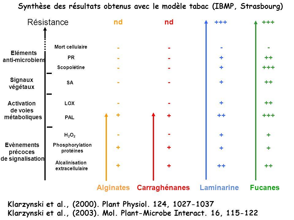 Synthèse des résultats obtenus avec le modèle tabac (IBMP, Strasbourg)