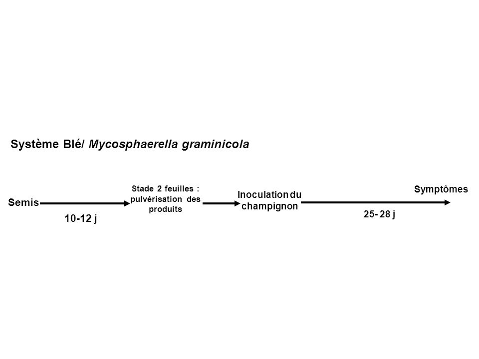 Système Blé/ Mycosphaerella graminicola