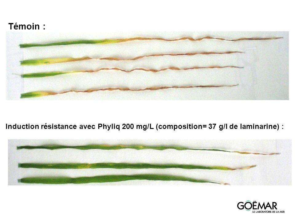 Témoin : Induction résistance avec Phyliq 200 mg/L (composition= 37 g/l de laminarine) :