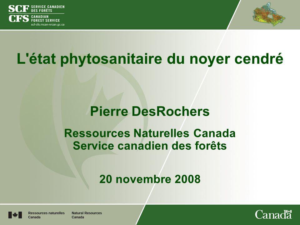 L état phytosanitaire du noyer cendré