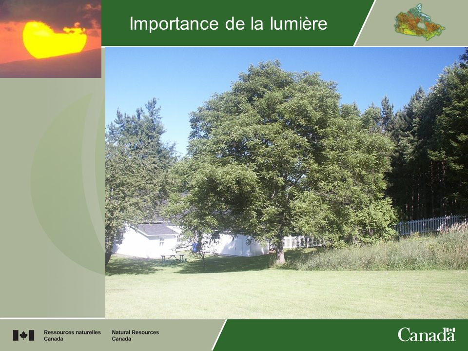 Importance de la lumière