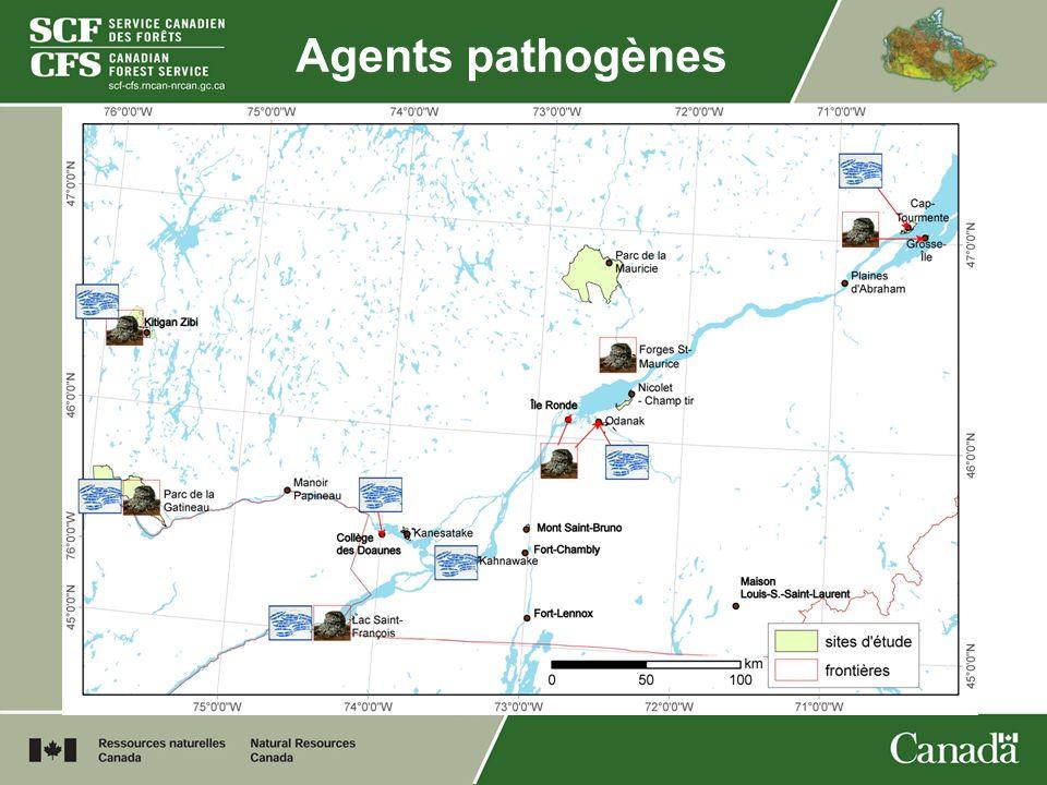 Agents pathogènes Lac Saint-François : 3 Scj, 5 Fs
