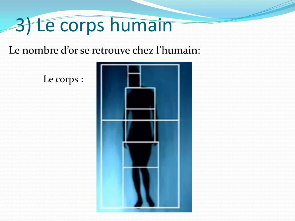 3) Le corps humain Le nombre d'or se retrouve chez l'humain:
