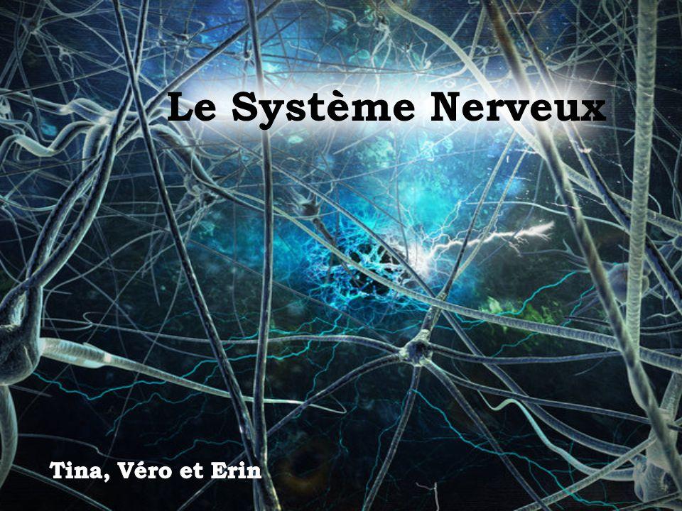 Le Système Nerveux Tina, Véro et Erin