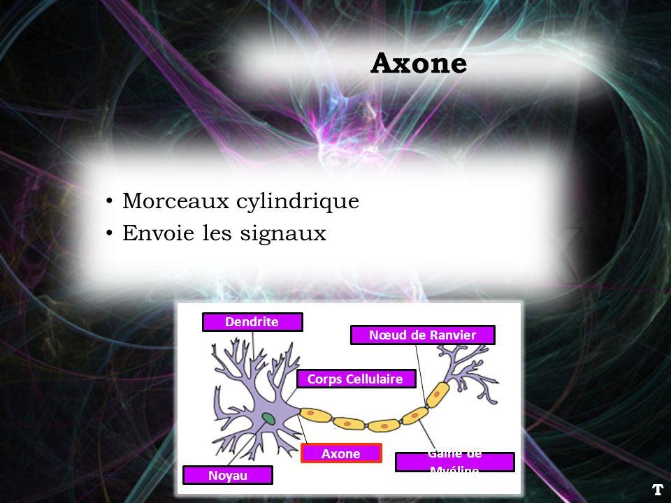 Axone Morceaux cylindrique Envoie les signaux T Dendrite
