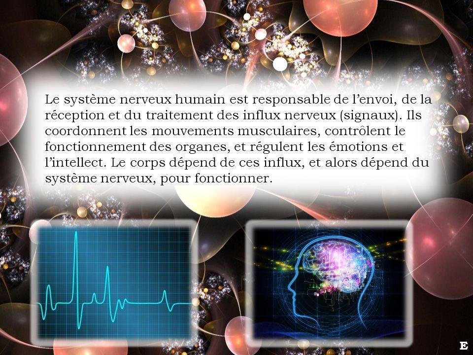 Le système nerveux humain est responsable de l'envoi, de la