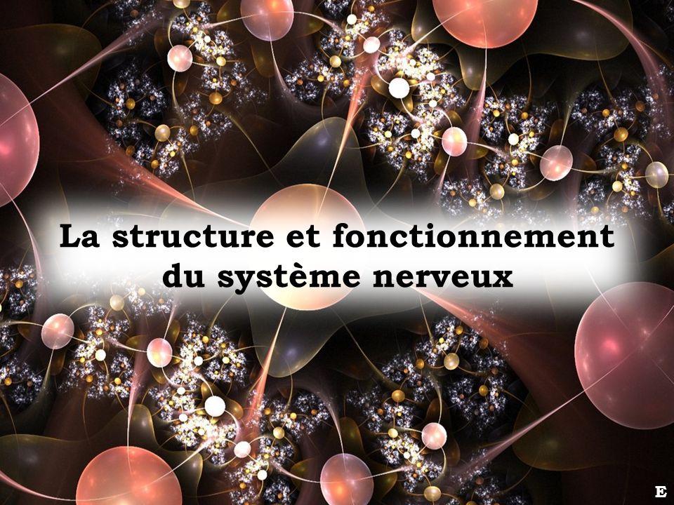 La structure et fonctionnement du système nerveux