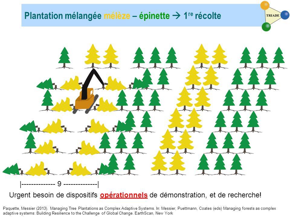 Plantation mélangée mélèze – épinette  1re récolte