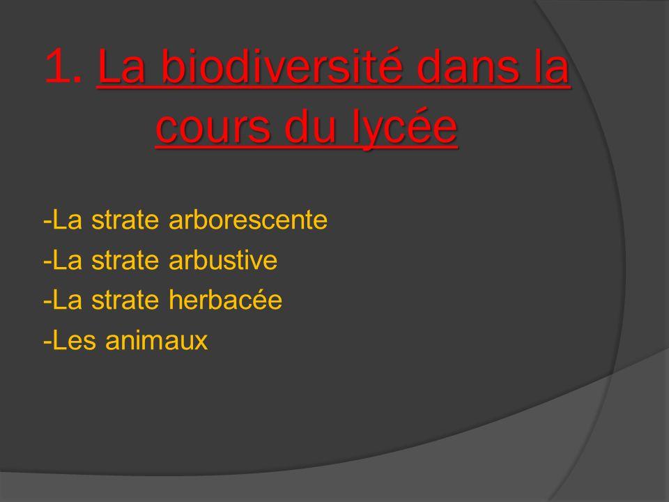 1. La biodiversité dans la cours du lycée