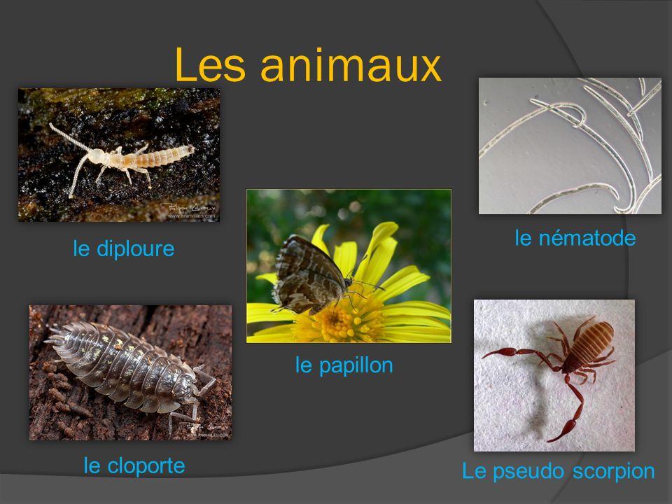Les animaux le nématode le diploure le papillon le cloporte