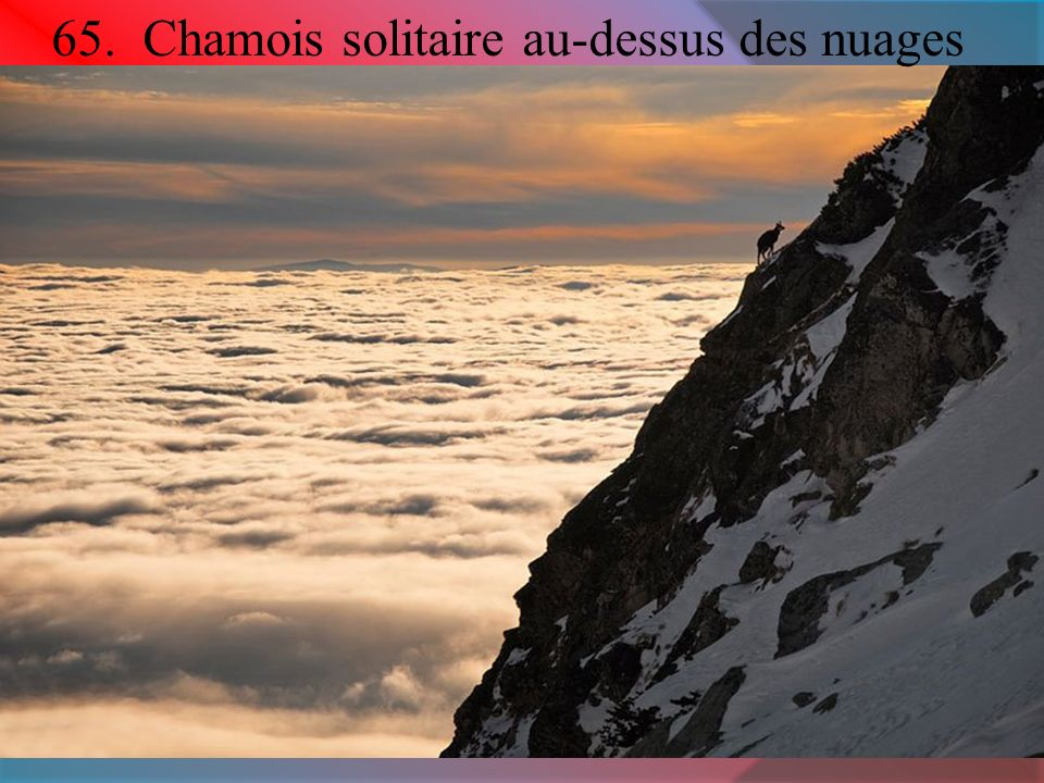 65. Chamois solitaire au-dessus des nuages