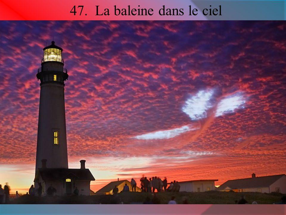 47. La baleine dans le ciel