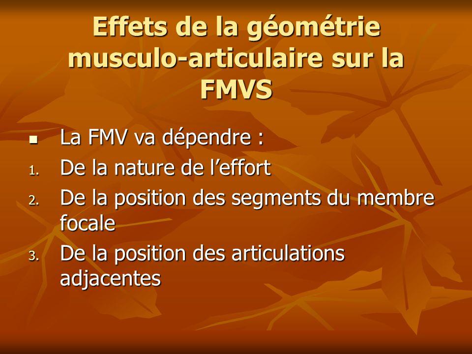 Effets de la géométrie musculo-articulaire sur la FMVS