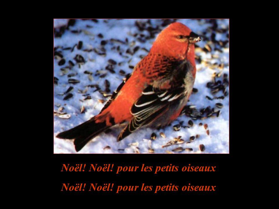 Le no l des petits oiseaux ppt t l charger for Les petits oiseaux