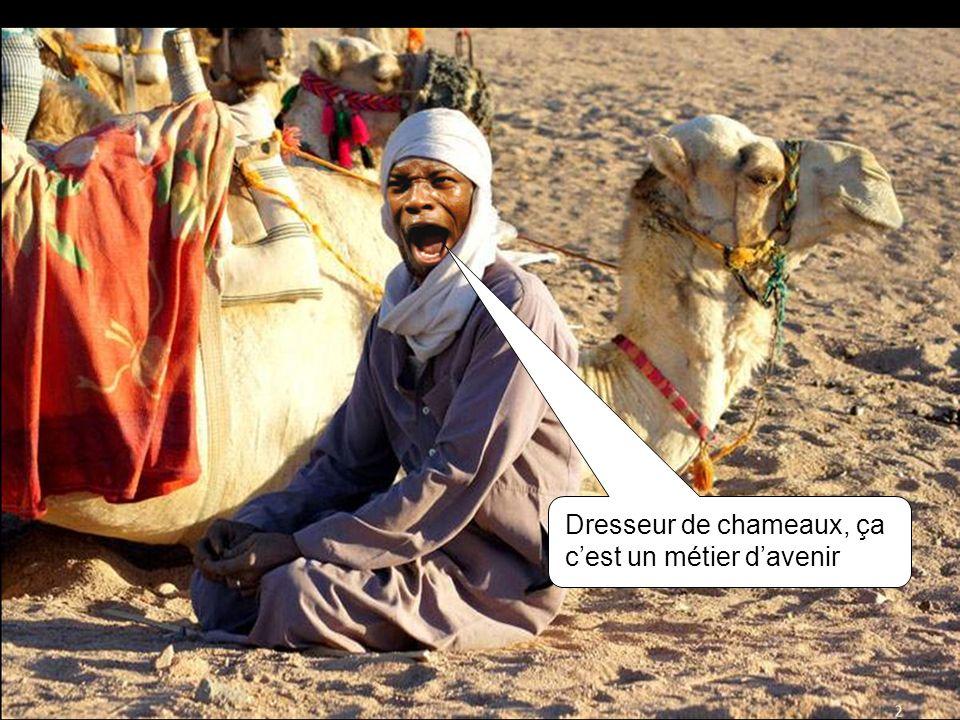 Dresseur de chameaux, ça c'est un métier d'avenir