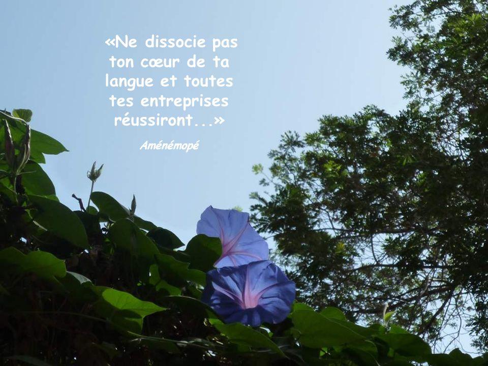 «Ne dissocie pas ton cœur de ta langue et toutes tes entreprises réussiront...»
