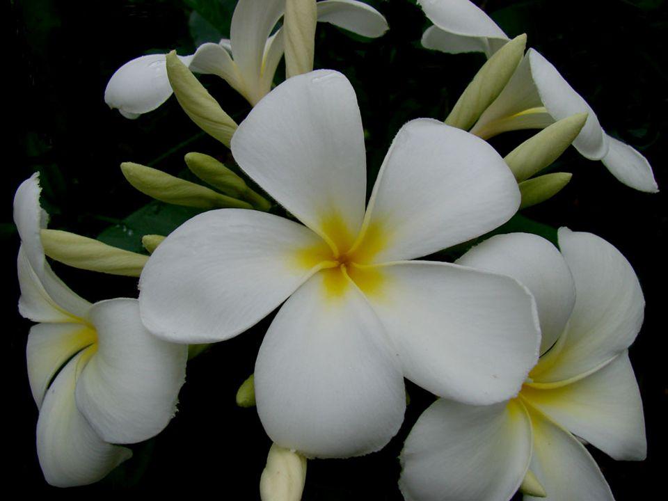 De très nombreuses fleurs sont pentamères