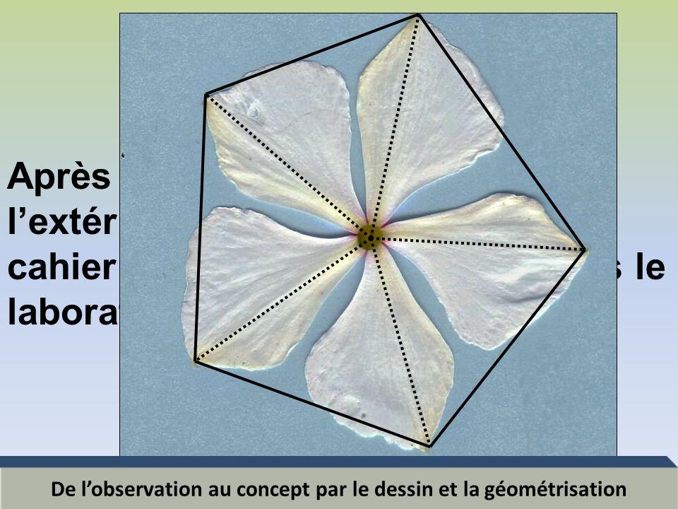 De l'observation au concept par le dessin et la géométrisation