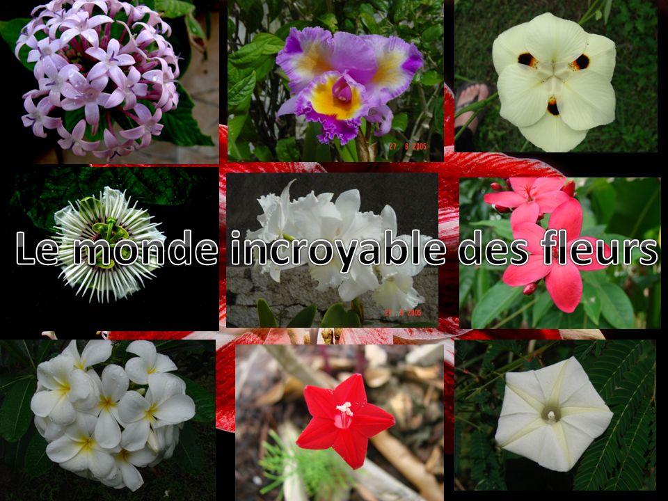Le monde incroyable des fleurs